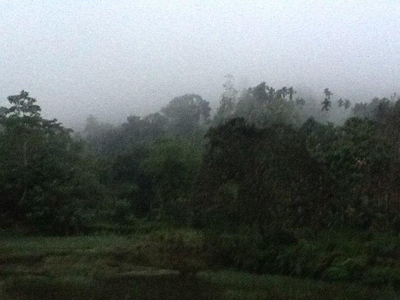 Świt w Singharaya Rainforest, Sri Lanka