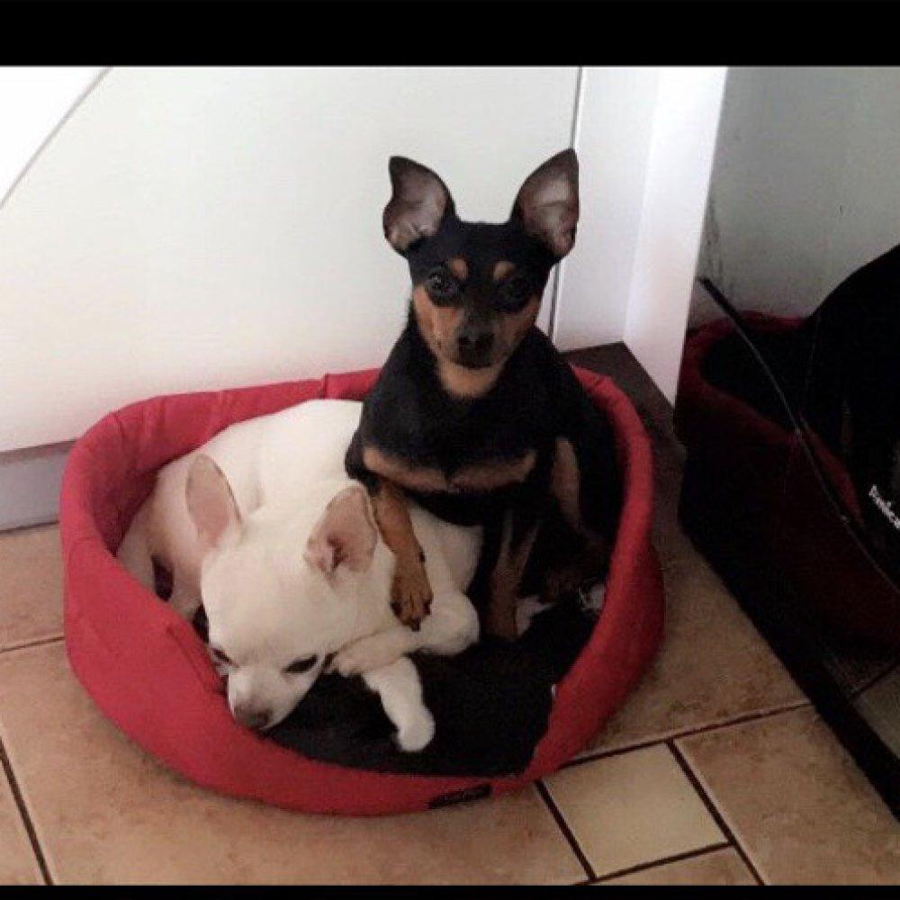 ee3a139ecae8c3 Kto jest winny, kiedy pies ucieknie z kliniki weterynaryjnej? Sprawdzamy |  naTemat.pl