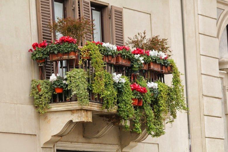 Pelargonie, surfinie, fuksje – latem nasz balkon powinien tonąć w kwiatach.