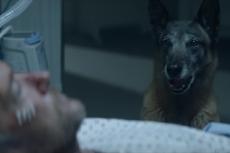 Psy uratowały życie mieszkance Łodzi. Wezwały pomoc do chorej, gdy ta nie mogła wstać z łóżka.