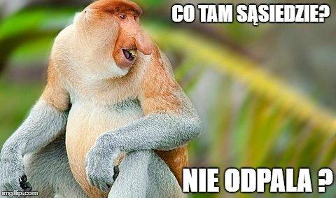 """Nosacz sundajski jest bohaterem serii memów wyśmiewających """"typowych Polaków"""". W internecie są setki przeróbek i zabawnych obrazków. Obnażają nasze stereotypowe wady."""