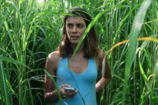 """Jednym z filmów, który trafi na platformę, będzie """"In the Tall Grass""""."""