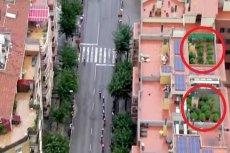 W czasie wyścigu kolarskiego Vuelta a Espana realizator przypadkowo pokazał plantację marihuany na dachu jednego z budynków.